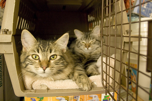 Cat carrier photo