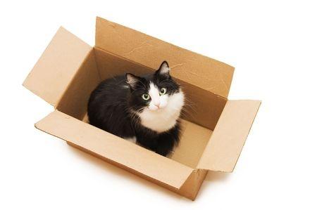 Die Wahl der richtigen Katzentransportbox