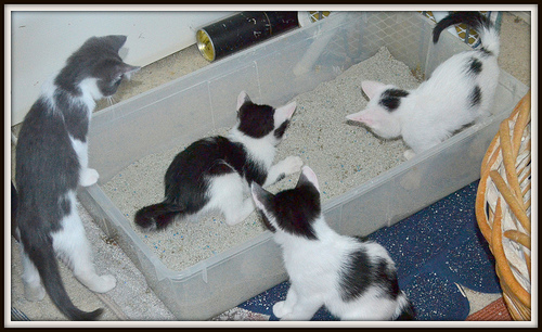 cat toilett photo