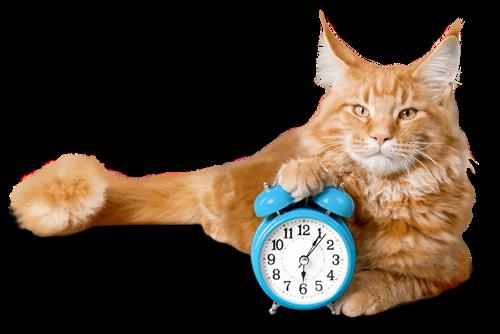 katzen lieben pünktlichkeit