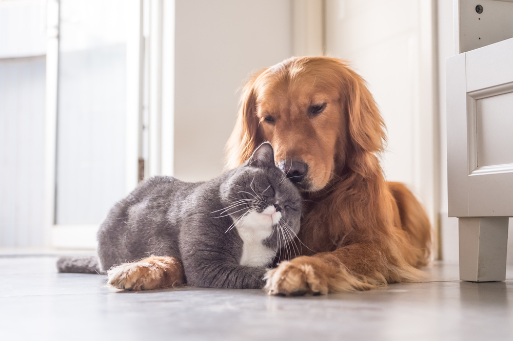Hunde oder Katze